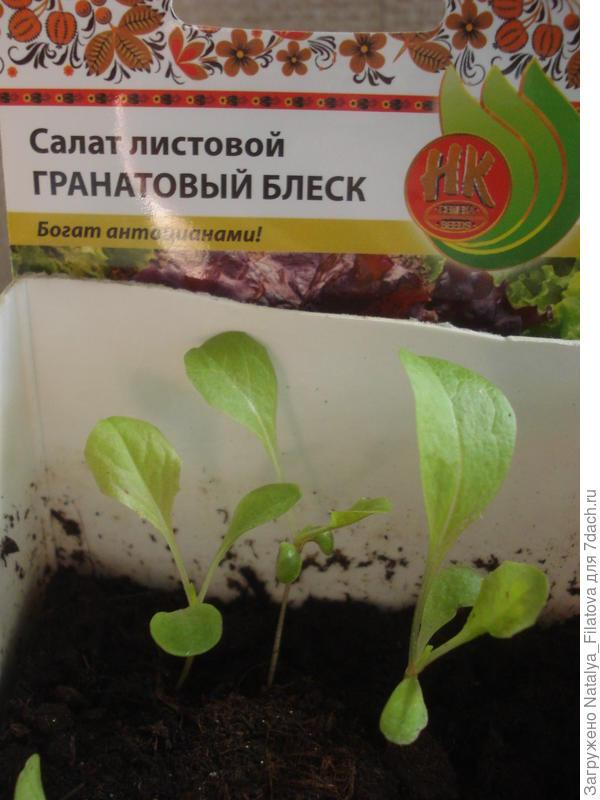 """салат """"Гранатовый блеск"""""""