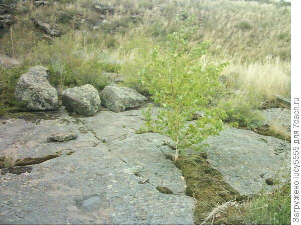 Растительность Аркаима