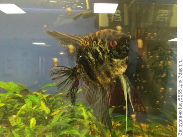 аквариумы