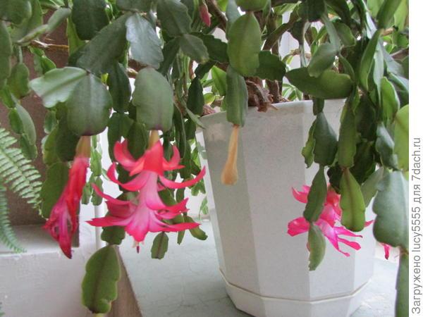 цветы на этажах
