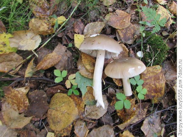 Первый гриб найден