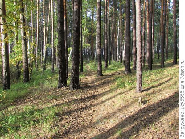 Красиво всё-таки в лесу!