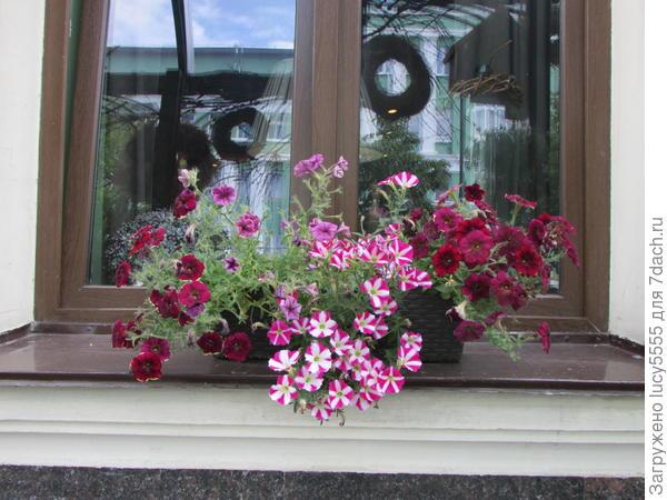 Ну очень много цветов