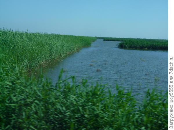 Здесь выращивают рис и благородную рыбу