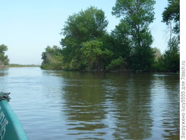 Вода очень высокая, деревья в воде, много сухих - погибших
