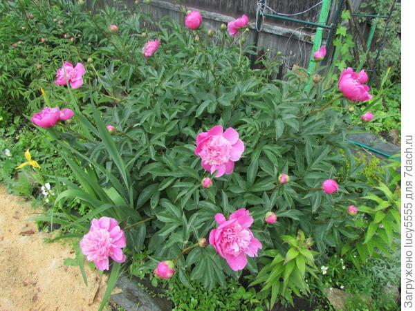 Прогулка по саду на террасах