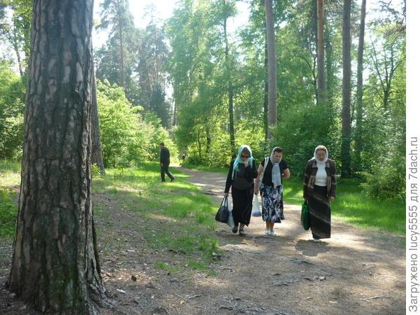 Это дорога на святой источник Пафнутия Боровского в Оптиной пустыни.