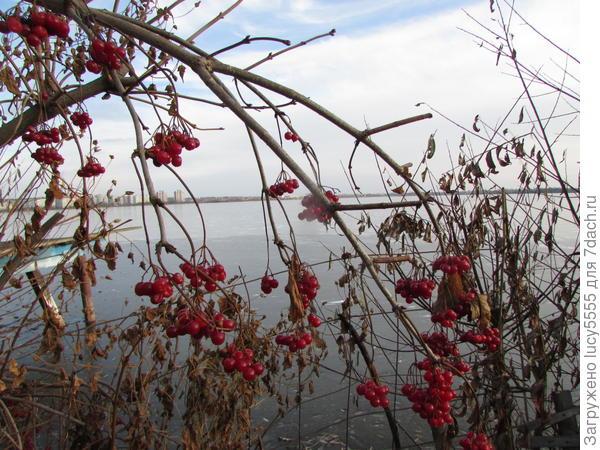 На берегу. Озеро подо льдом