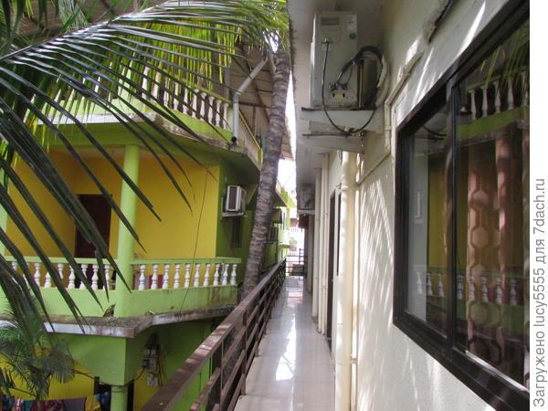 Пальма между двумя отелями