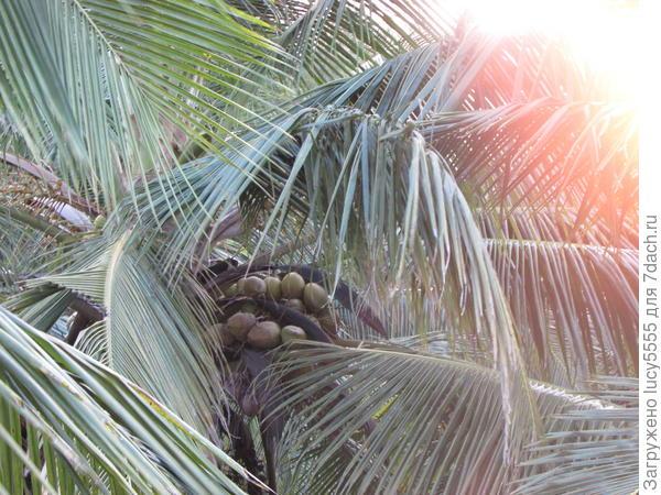 До кокосов, правда, не дотянуться)))
