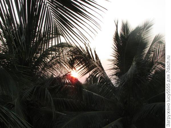 Пальмы прямо на балконе создают тень