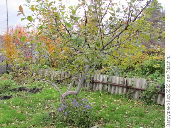 колокольчики под яблоней вовсю цветут