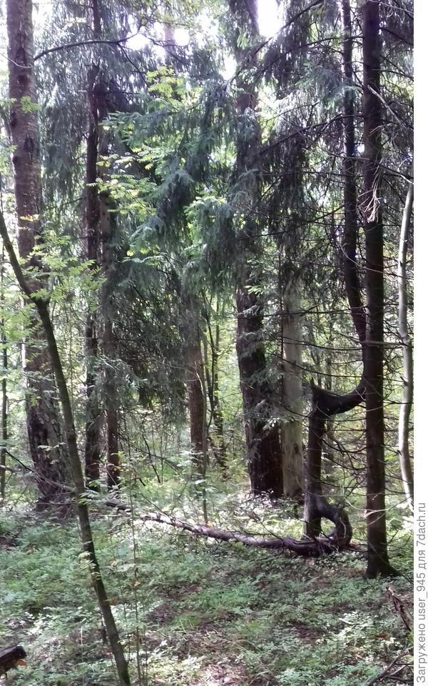 Мне понравилась эта елка-чудище)))