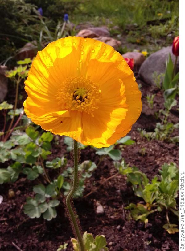 Двойной подарок, цветы люблю все, но желтые особенно)))
