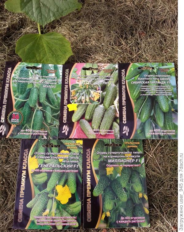 Призовые семена)))