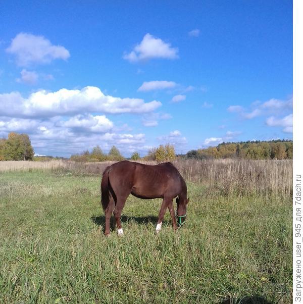 Давно не видела лошадок так близко))