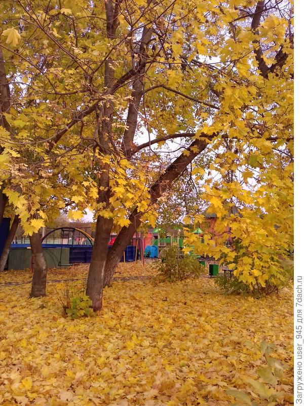 Ковер изкленовых листьев))
