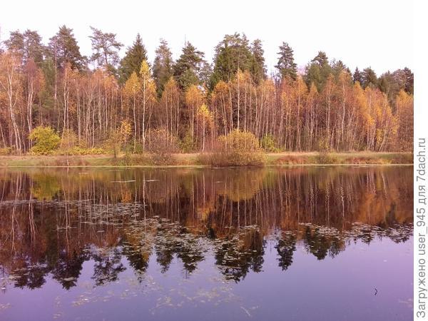 Еще немного и злато осени поблекнет))