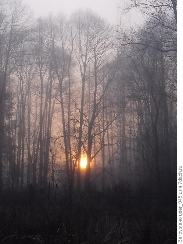 Туман))