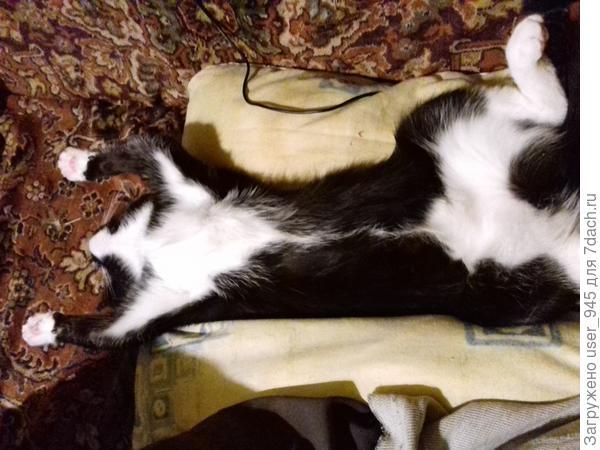 Муся спит на любимой подушке))