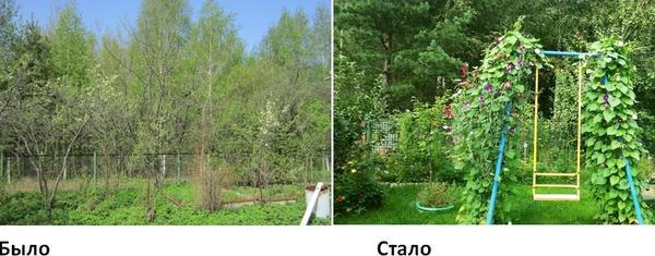 Вместо бурьяна появился газон с качелями