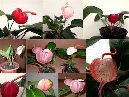 Расцветка