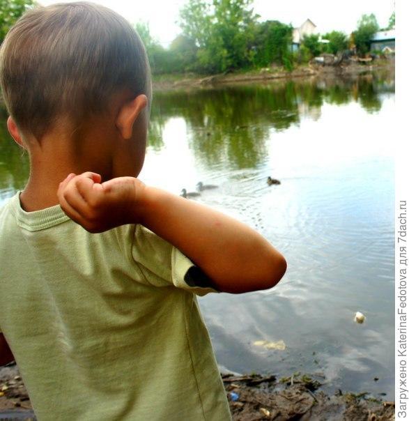 сын кормит уток на озере