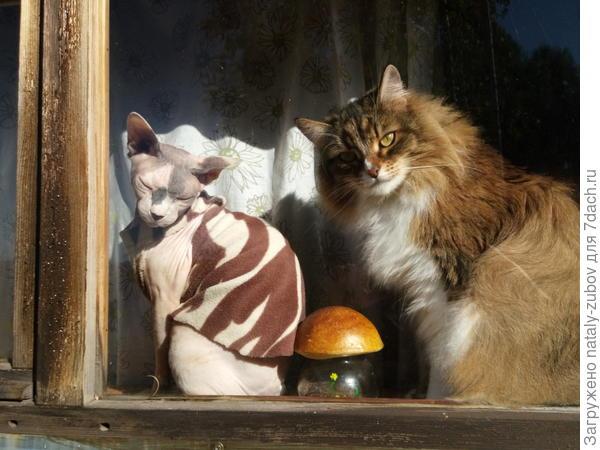 кошачье племя наблюдает за мной