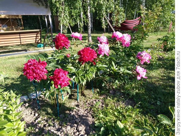 буду с надеждой ждать следующего лета, цветение должно быть больше