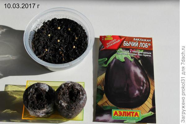 посев семян в грунт и торфяные таблетки
