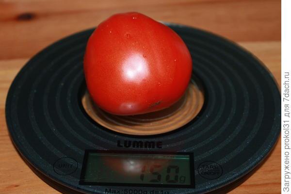 томат первый  10.08