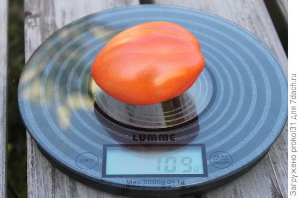 томат самый мелкий