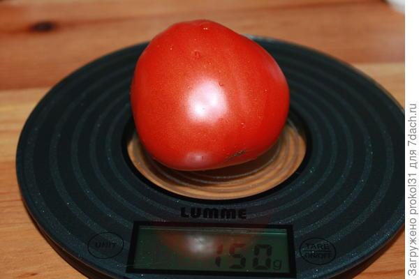 первый томат