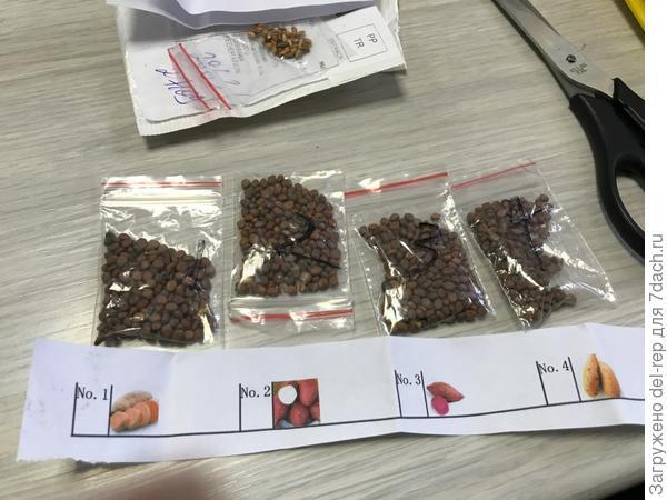 Посылочка из Китая с семенами