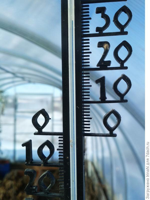 А в теплице достаточно тепло!