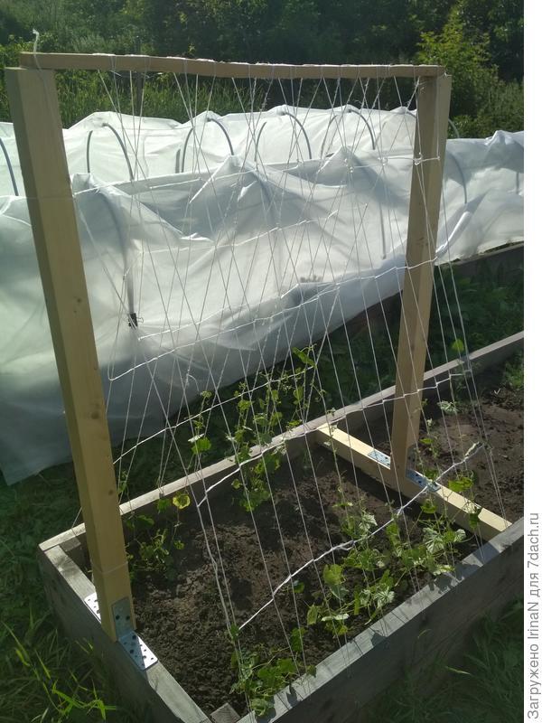 Надеюсь, шпалера выдержит мега-урожай!!!