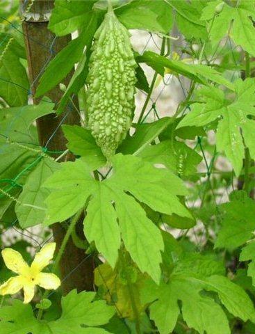 листочки и плоды