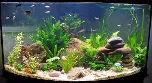 аквариумная вода