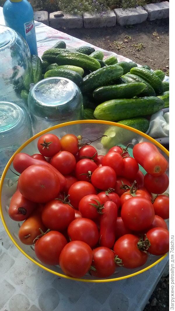 овощи на все времена