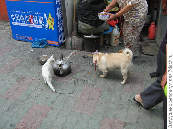 жилье уйгуров