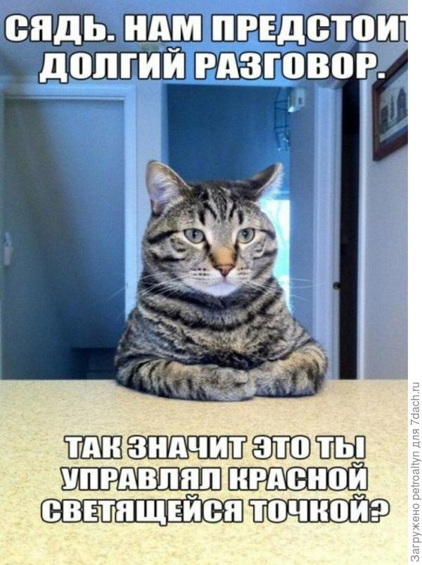 и о котиках)))