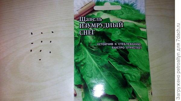 семена щавеля