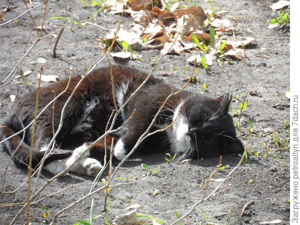 вот этот уличный спал как убитый, специально стояла смотрела, может отреагирует, все же фоткаю) но он, видимо уработался, да и солнышко припекало дюже хорошо!