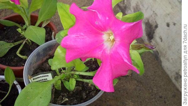 цветение в теплице