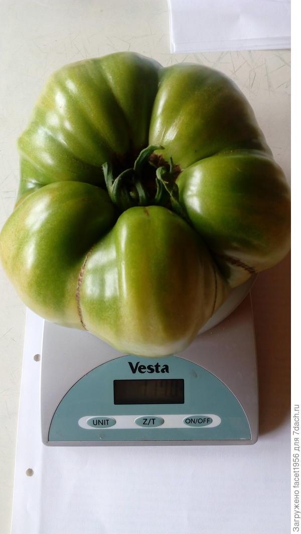 Фото томата. Предположительно это Король Сибири