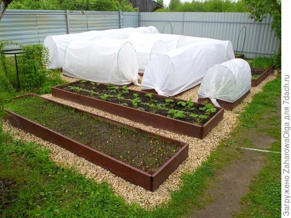 Мой мини-огород