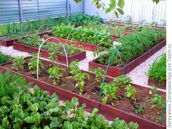 Мой модернизированный огород