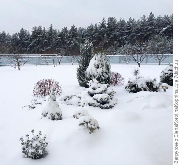 Под белым покрывалом января