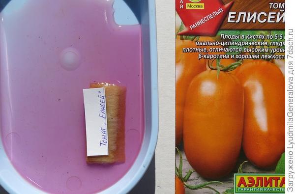 Семена  в растворе марганцевокислого калия