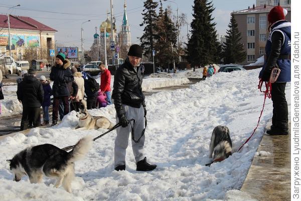 """Вот сегодня  ходили на пикет в защите животных (я сбросила несколько штук в фотоконкурс """"О этот взгляд"""". Это в центре Омска ещё такие сугробы."""